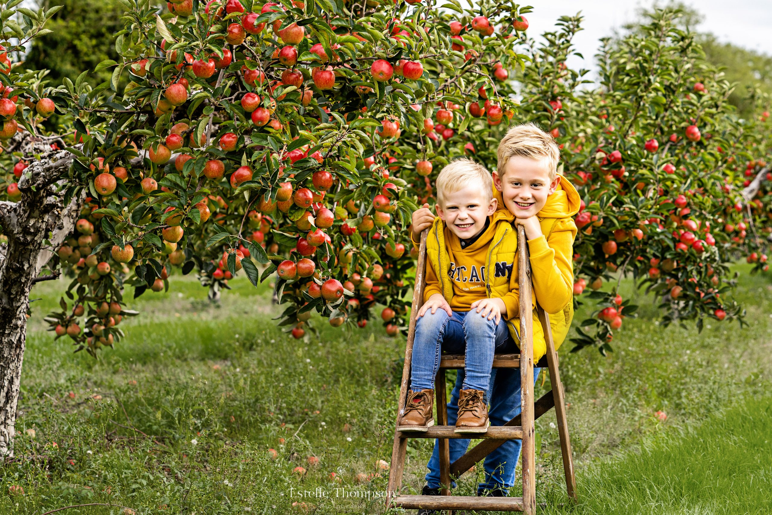 Two brothers sit on a wooden ladder in an apple orchard in kent for a family photoshoot