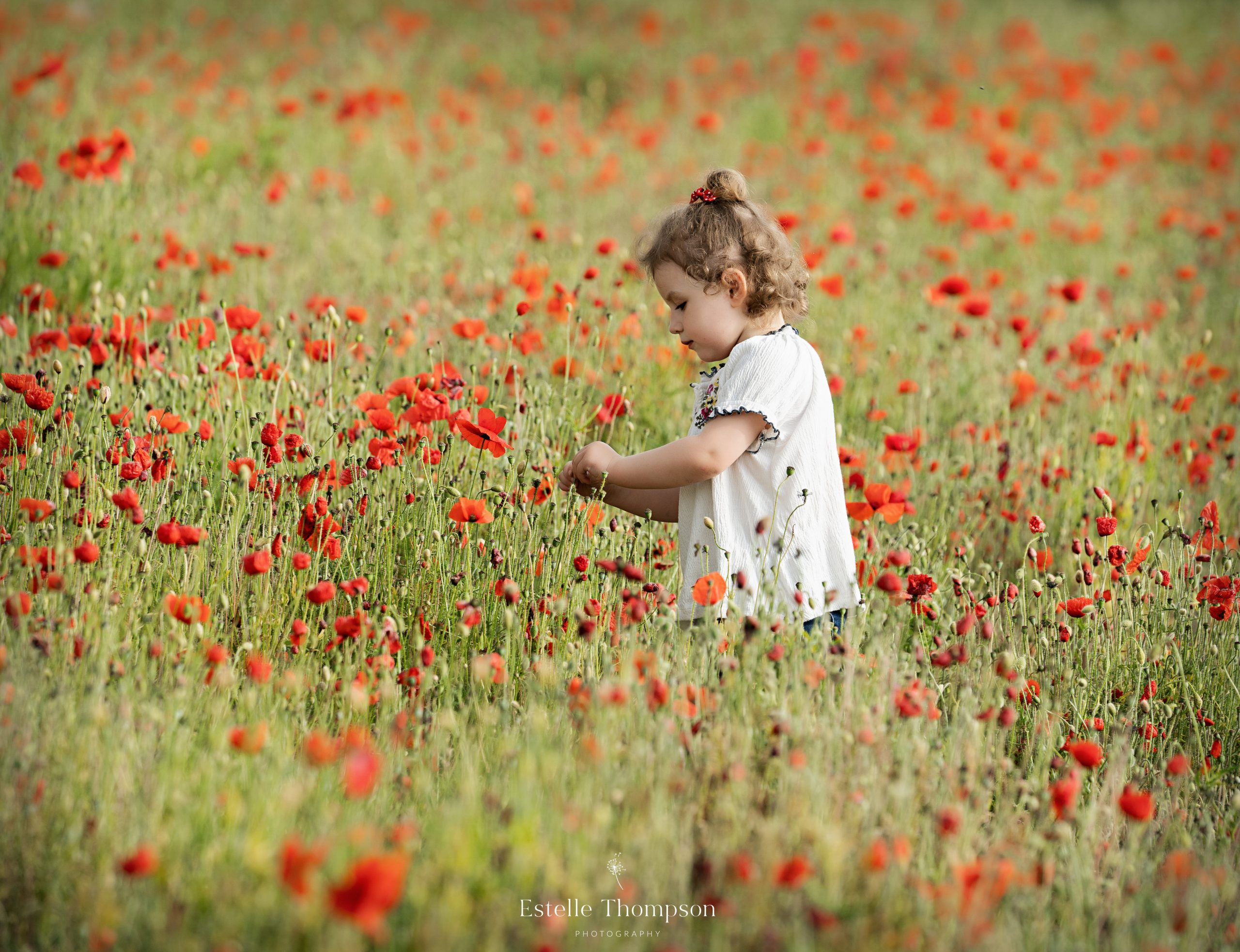 A little girl picks poppies in a field for a family photorapher in sevenoaks